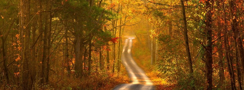 Autumn forest road scenery