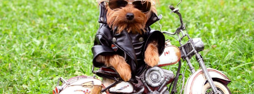 biker little dog stylish style cool cute