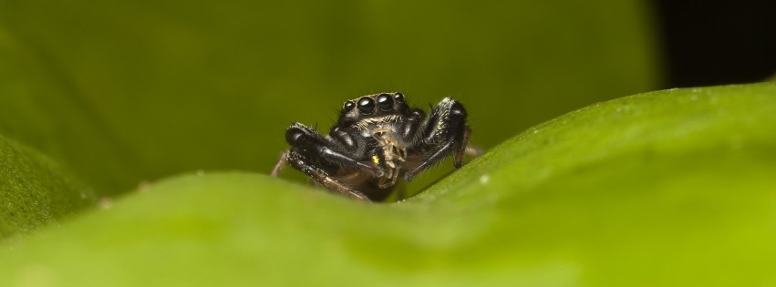 Little Spider on a Leaf