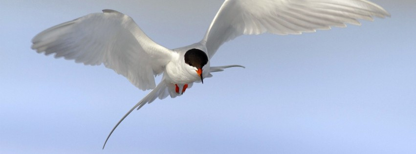 Terns Animal 2