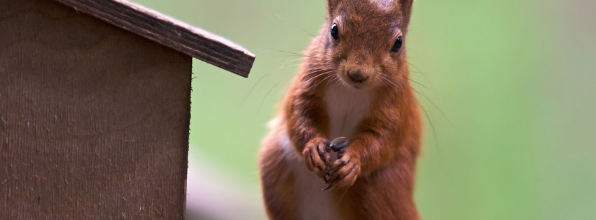 Animal cute red animal squirrel papers gallery