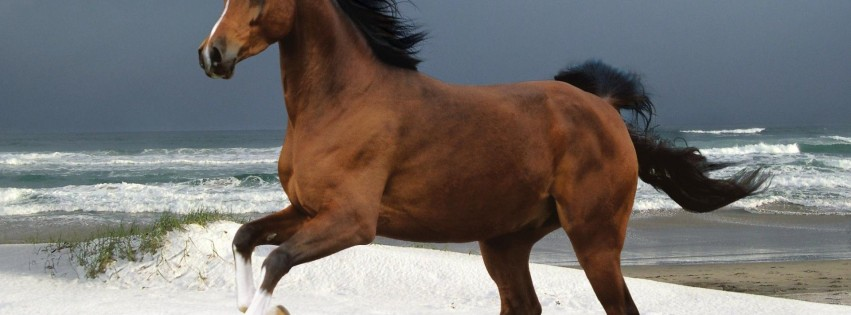 Majestic brown horse